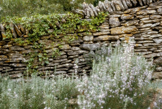 Dry-stone wall with rosemary flowers : Stock Photo