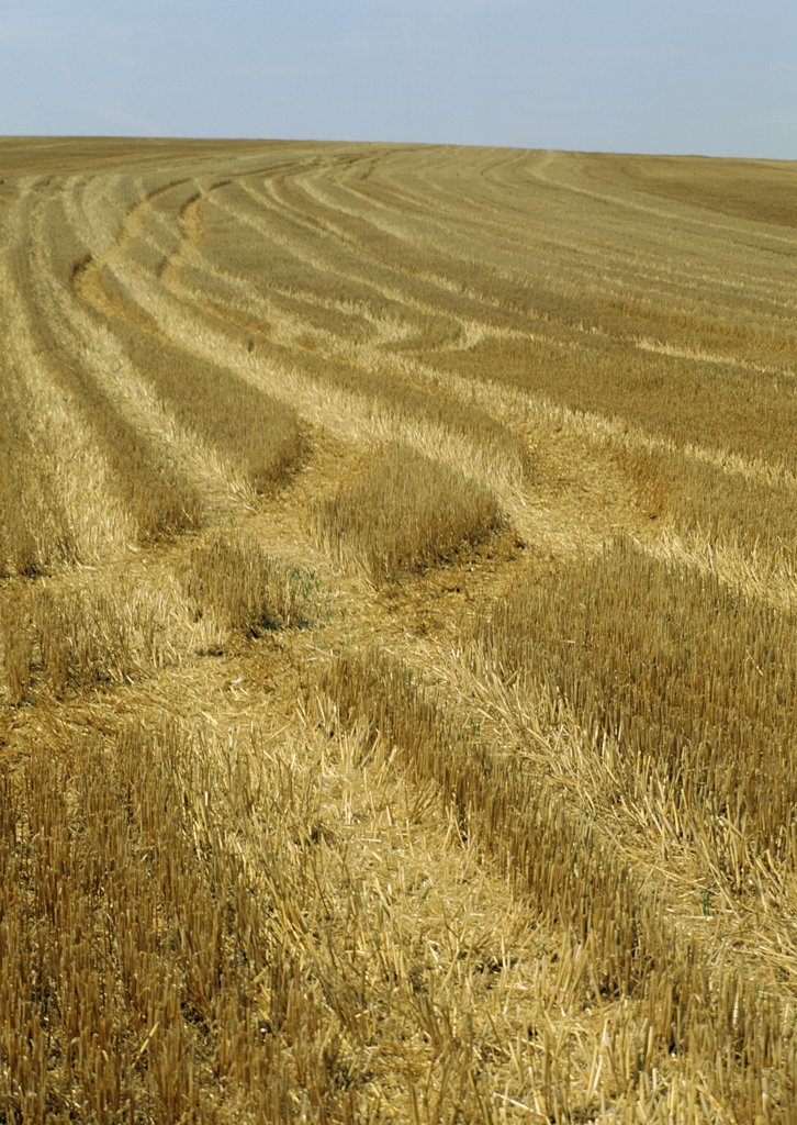 Stock Photo: 1606-85165 France, Paris region, Val d'Oise, Vexin, harvested wheat field