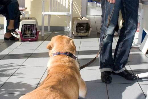 Stock Photo: 1606-87367 Consultations at the veterinary surgeon, 2 cats, 1 dog