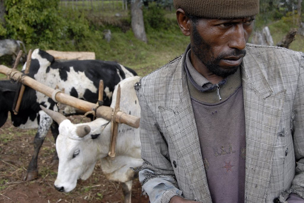Ethiopie, Ankober, Ankober farmer and cattle : Stock Photo