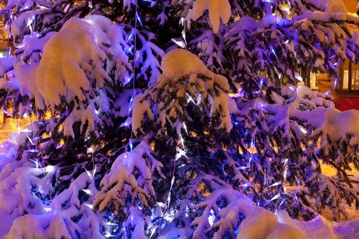 Snowed fir tree at Christmas, by night : Stock Photo