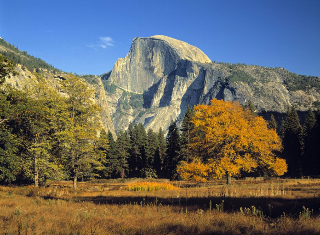 Stock Photo: 1609-11322 Half Dome, Yosemite NP, California, USA