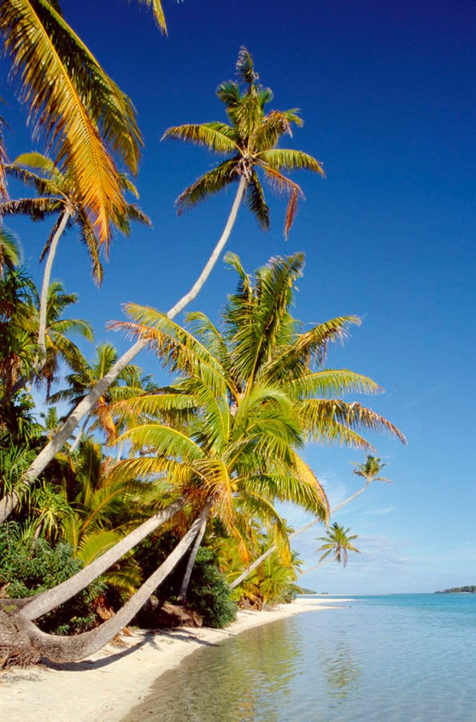 Stock Photo: 1609-12018 Palm Trees & Tropical Beach, Aitutaki Island, Cook Islands, Polynesia. Atoll / Palm Trees & Tropical Beach / Sea & Sand, Aitutaki Island, South Pacific / Polynesia, Cook Islands