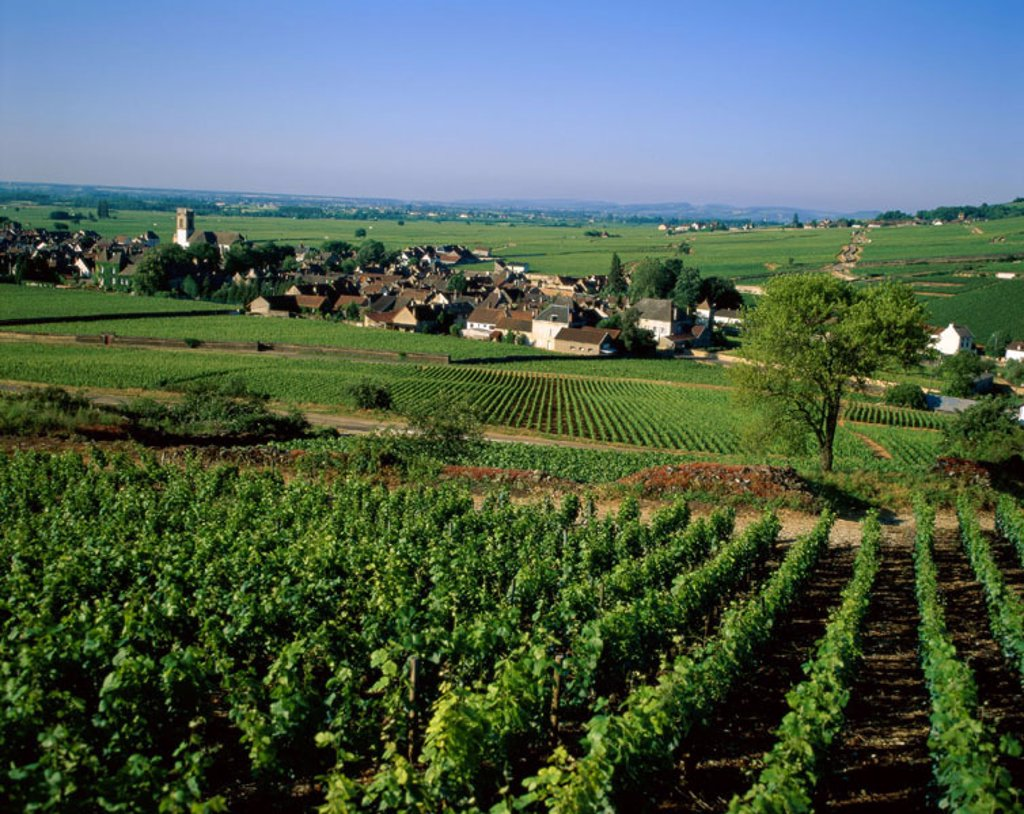 Village & Vineyards, Pernand Vergelesses, Burgundy (Bourgogne), France : Stock Photo