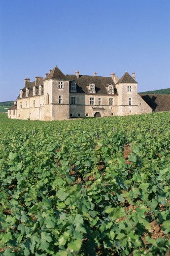 France, Burgundy, Vougeot Castle and Vines : Stock Photo