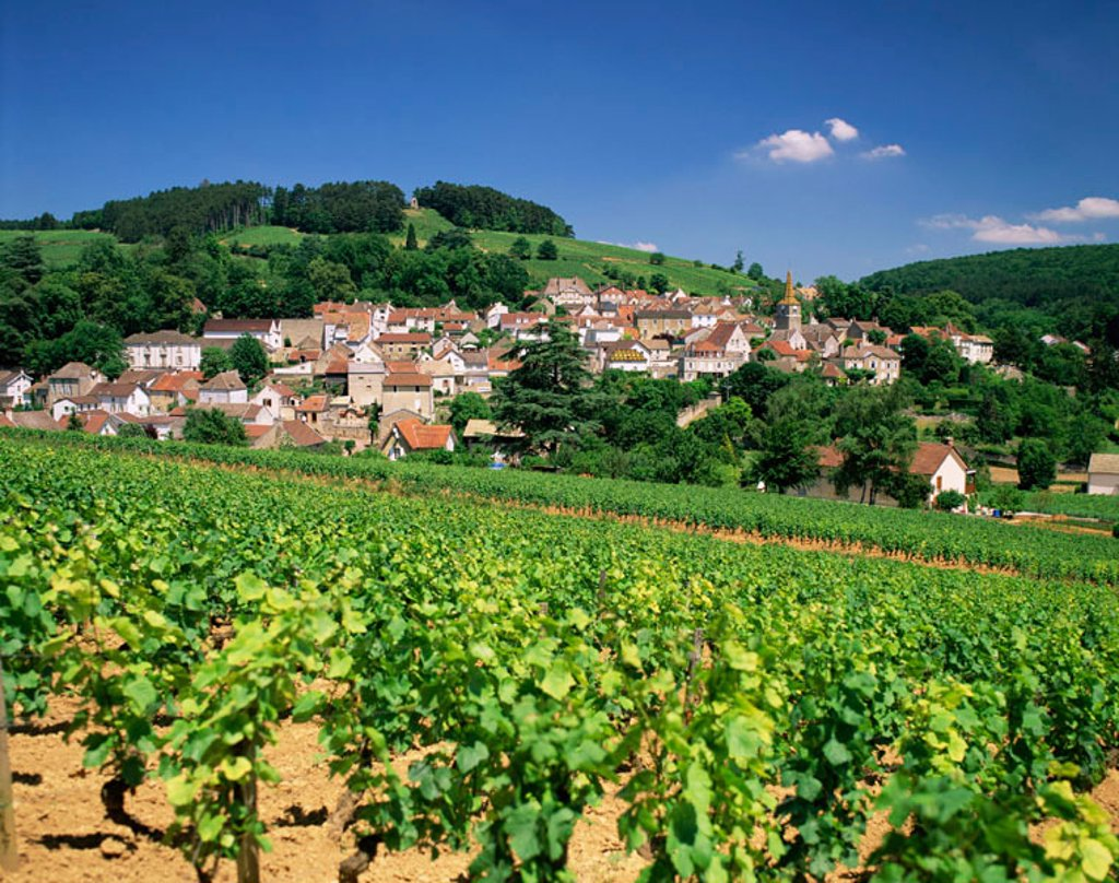France, Burgundy, Pernand Verglesses Village and Vineyards : Stock Photo