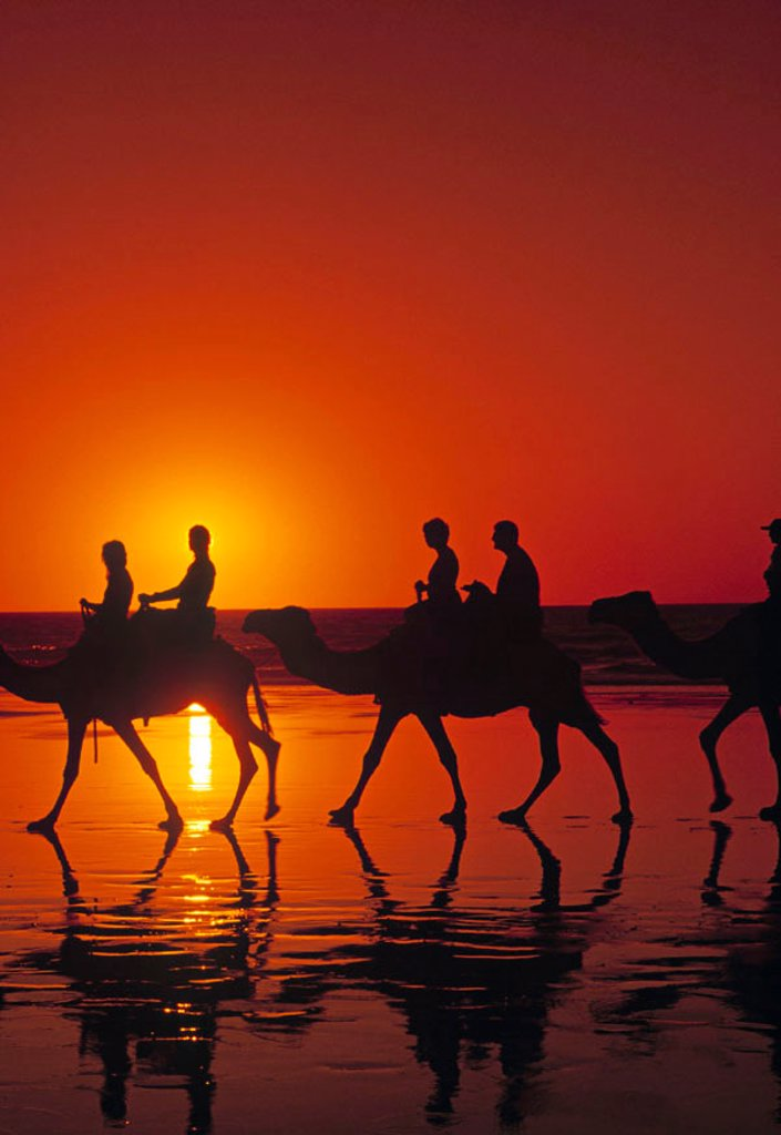 Camel Trekking, Cable Beach, Broome, The Kimberley, Australia : Stock Photo