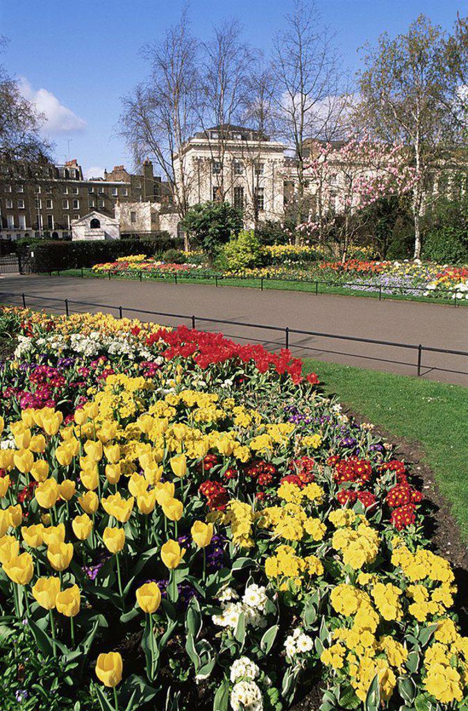 Stock Photo: 1609-21840 England,London,Regents Park