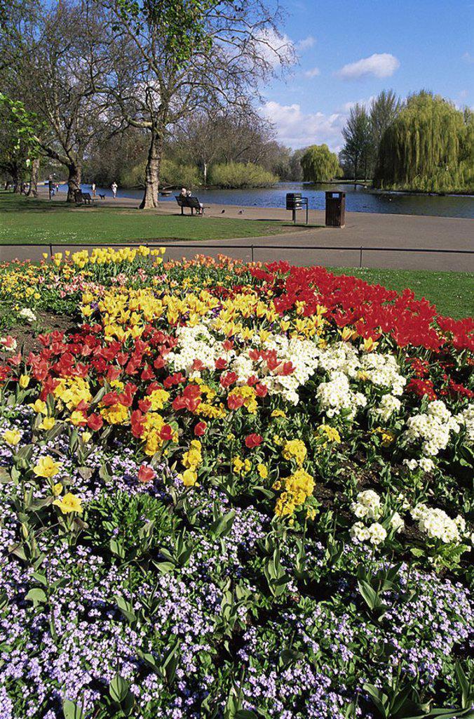 Stock Photo: 1609-21841 England,London,Regents Park