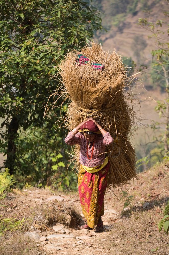 Stock Photo: 1609-25679 Nepal, Pokhara, Local woman carrying heavy bale of hay on her back