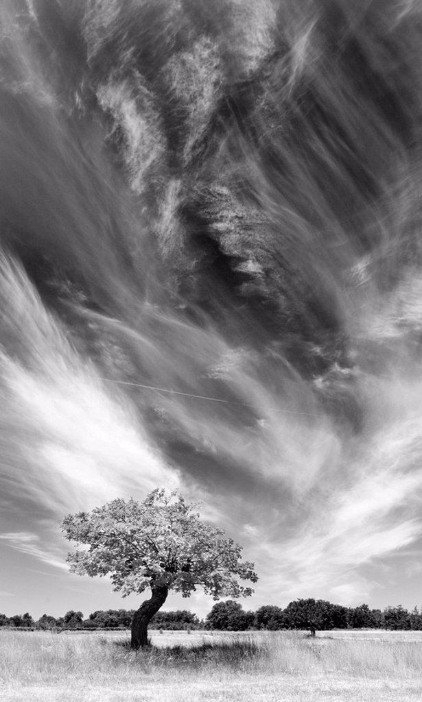Tree and clouds, Provence, France : Stock Photo