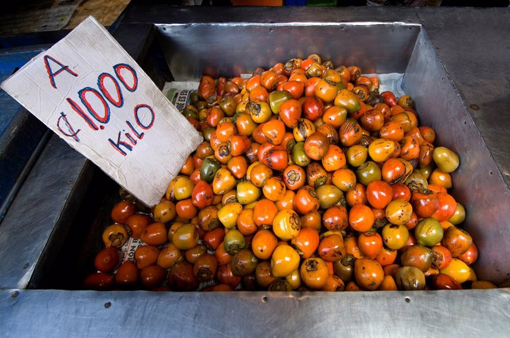 Stock Photo: 1609-34928 Costa Rica, Cartago, Mercado Muncipal de Cartago, Fruit and Vegetable Market, Cooked Pejibayes, Palm Fruit