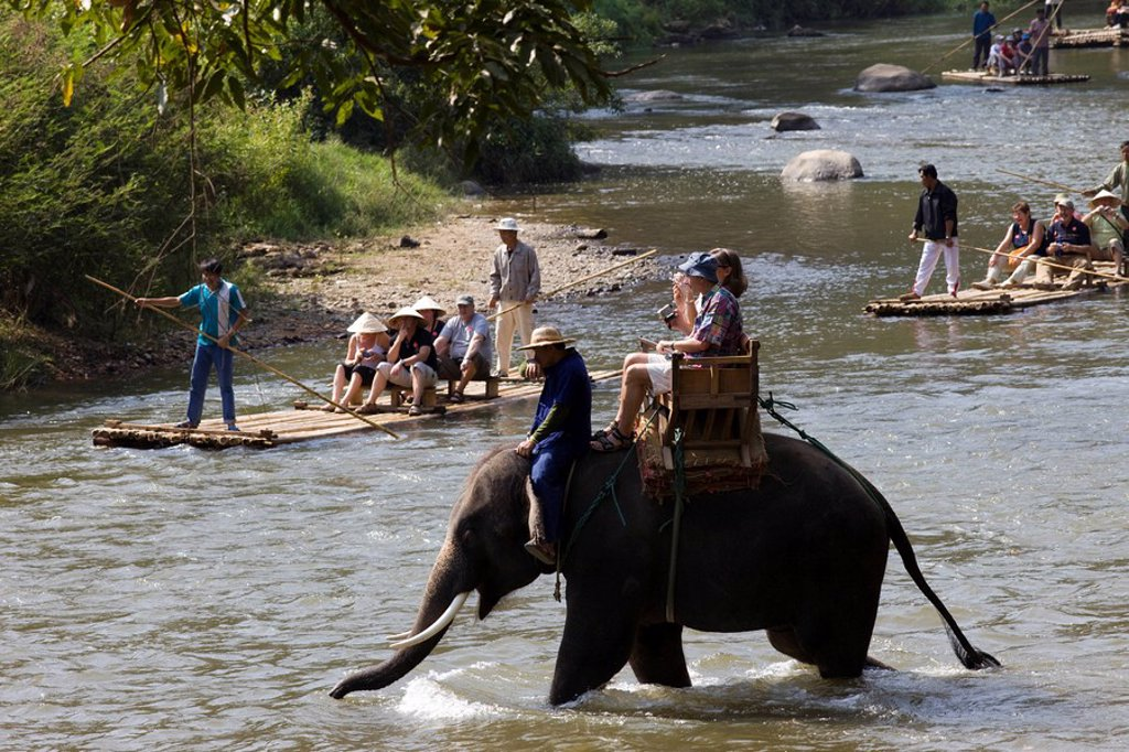 Stock Photo: 1609-41447 Thailand, Chiang Mai, Elephant Camp, Tourist Elephant Trekking