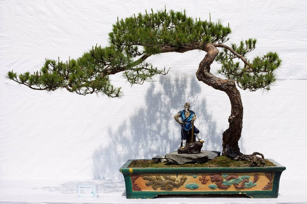 Stock Photo: 1609-41543 Bonsai tree, Hong Kong, China