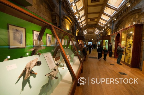 Stock Photo: 1609-44128 UK, Enlgland, London, South Kensington, Natural History Museum, Birds Gallery