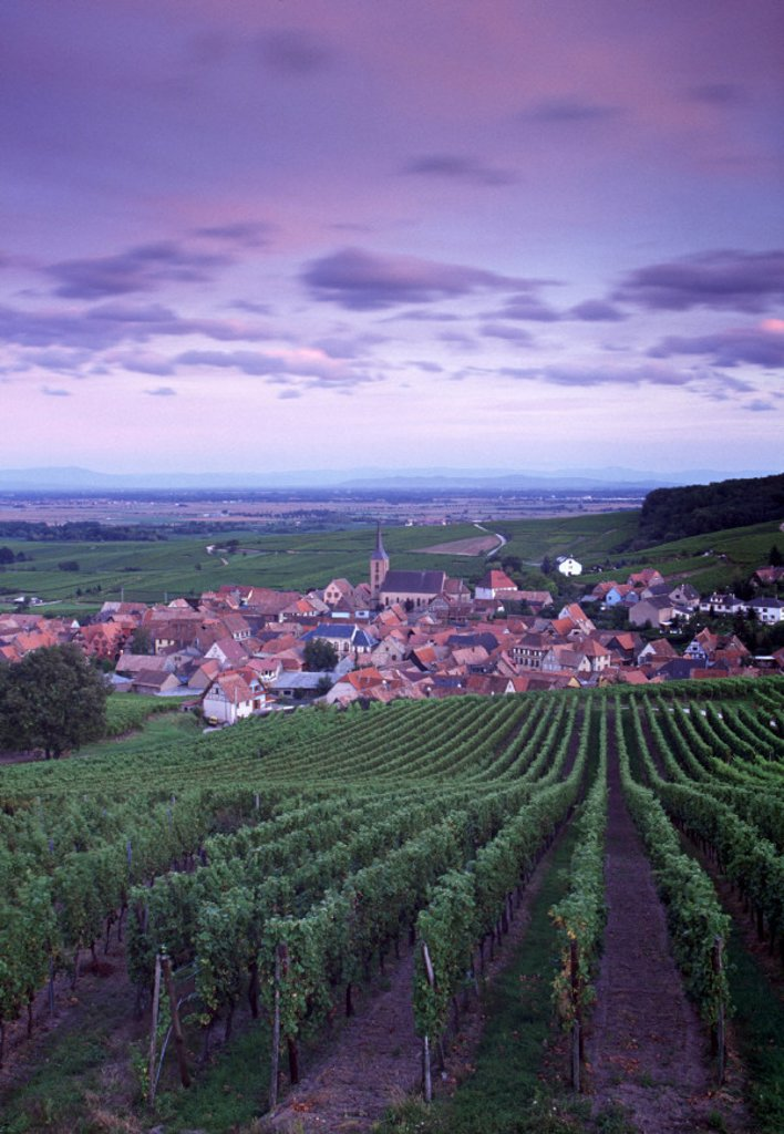 Stock Photo: 1609-4533 Blienschwiller, Alsace, France