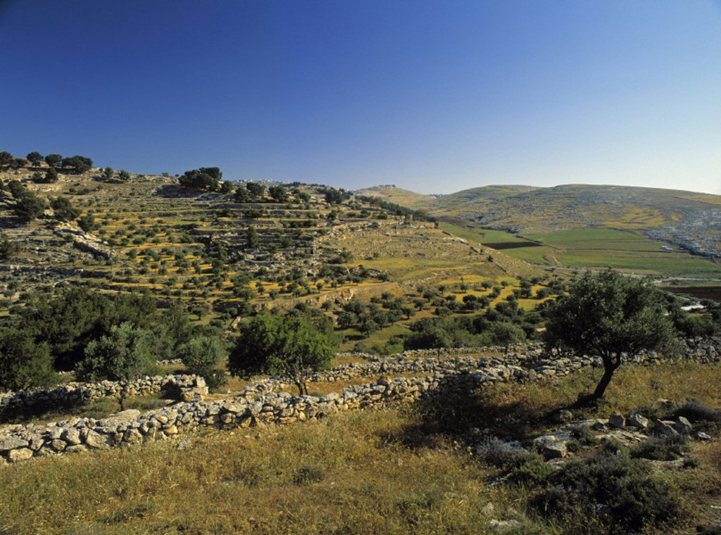 Stock Photo: 1609-6270 Shepherds´ Fields, Bethlehem, Israel