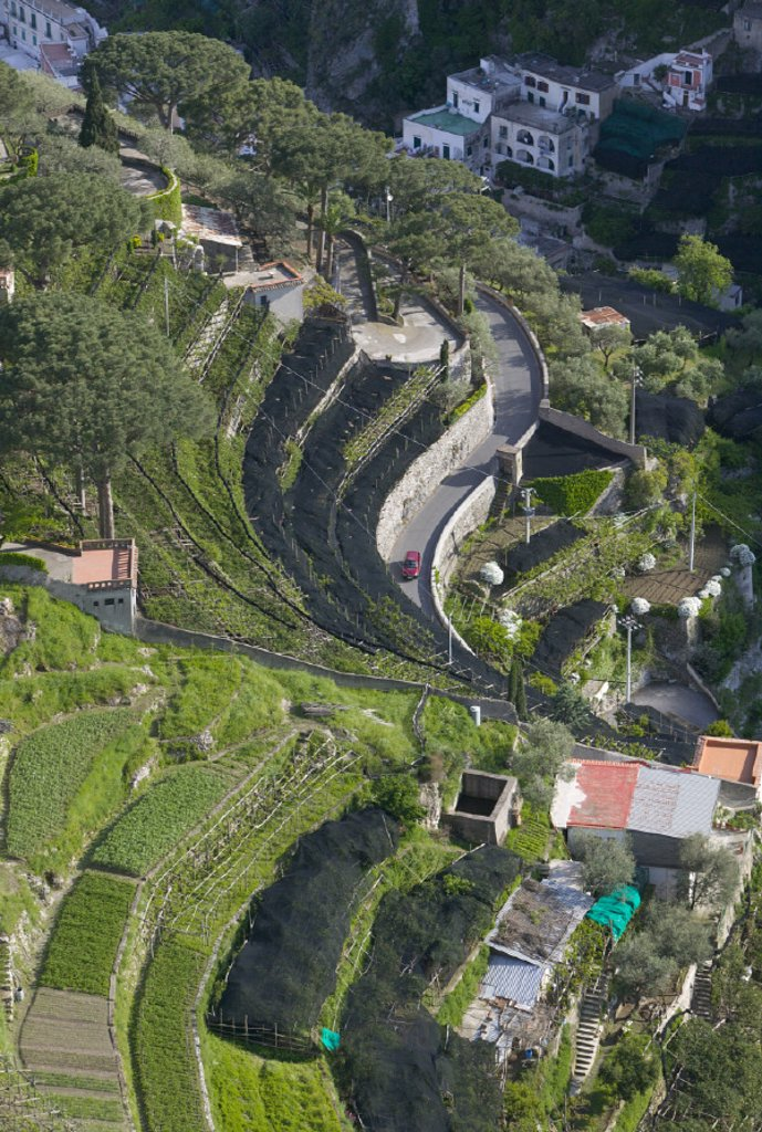 Stock Photo: 1609-7080 Terraced Farm, Ravello, Amalfi Coast, Campania, Italy