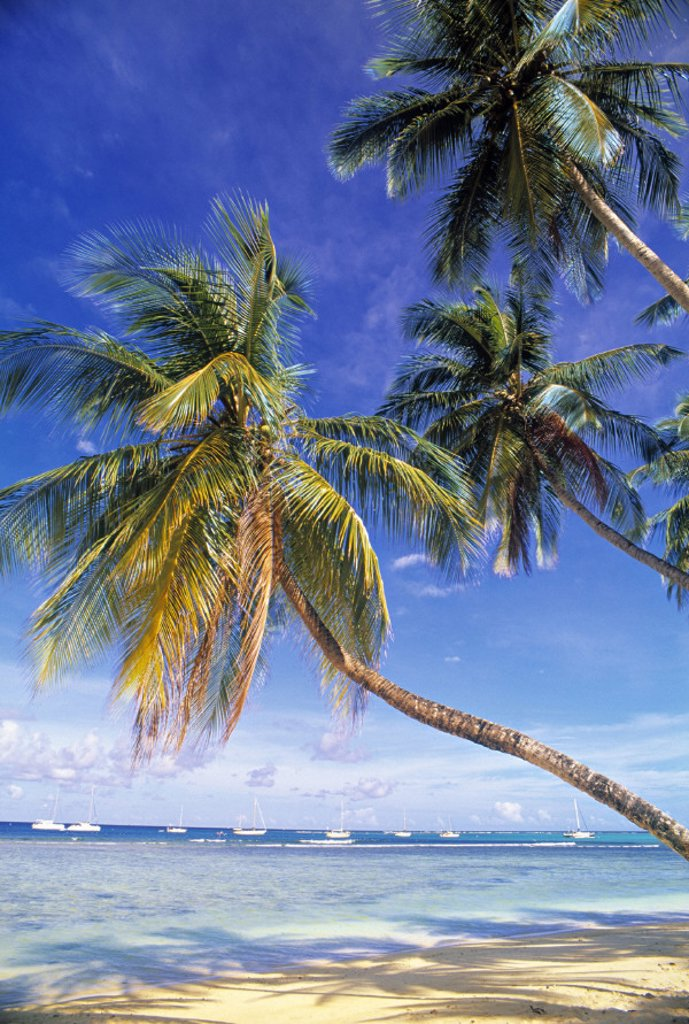 Pigeon Point, Tobago, Trinidad & Tobago : Stock Photo