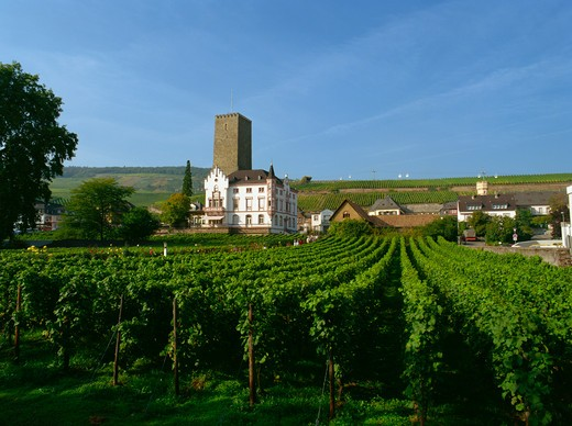 Rudesheim, Rhine Valley, Rhineland-Palatinate, Germany : Stock Photo