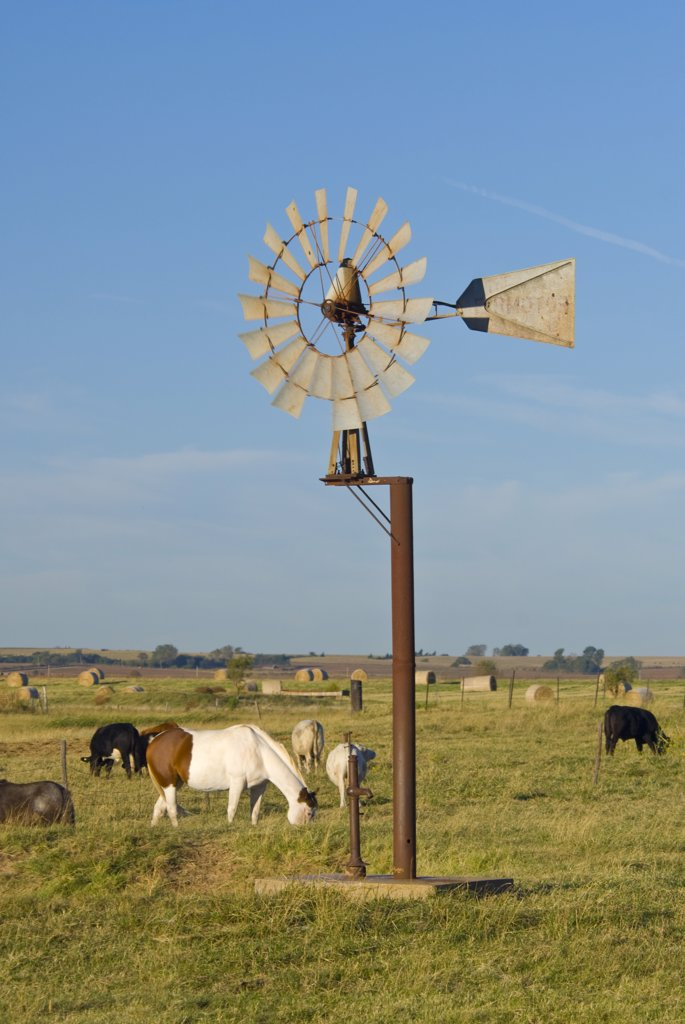 USA, Oklahoma, Route 66, near Calumet, Windpump and livestock : Stock Photo