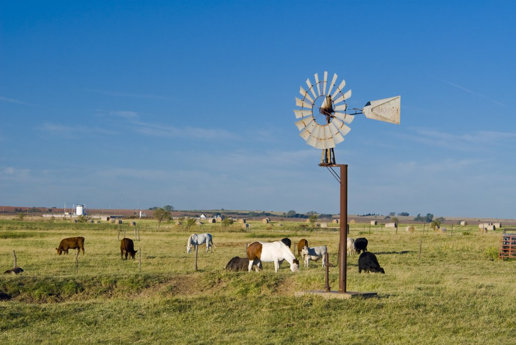 Stock Photo: 1609R-32283 USA, Oklahoma, Route 66, near Calumet, Windpump and livestock