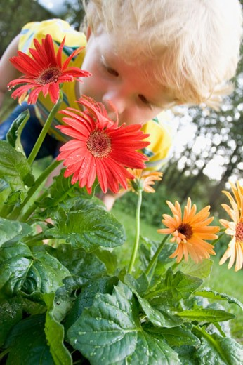 Stock Photo: 1618-207 Close-up of a boy smelling a daisy