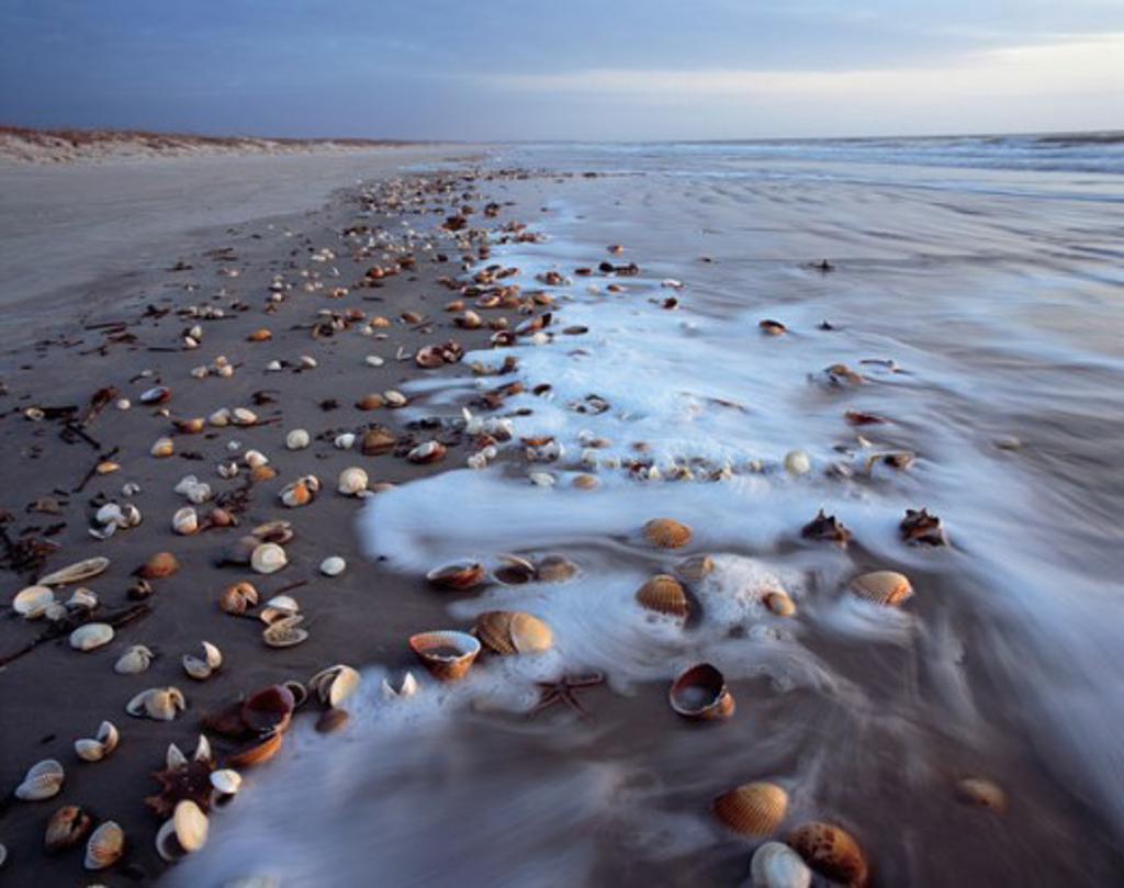 Stock Photo: 1622-118 Seashells on the beach, Cumberland Island National Seashore, Georgia, USA