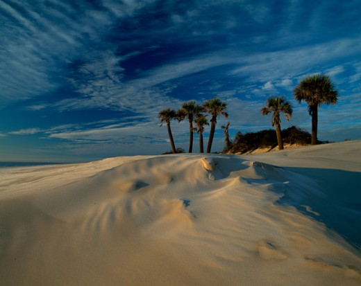 Stock Photo: 1622-120 Palm trees on a landscape, Cumberland Island National Seashore, Georgia, USA
