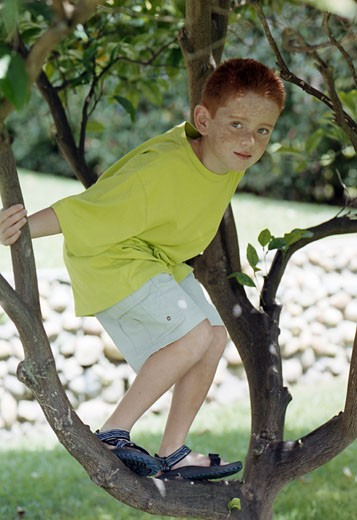 Boy climbing a tree : Stock Photo
