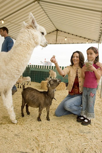 Family with zoo animals : Stock Photo