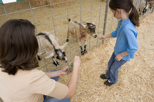 Stock Photo: 1624R-5260 Family with zoo animals