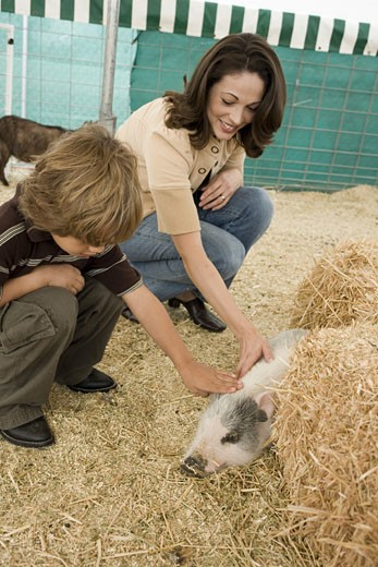 Stock Photo: 1624R-5294 Mother and son with pig