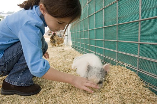 Young girl with pig : Stock Photo