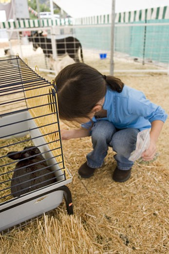 Young girl with bunny cage : Stock Photo
