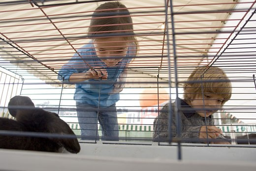 Young kids with bunny cage : Stock Photo