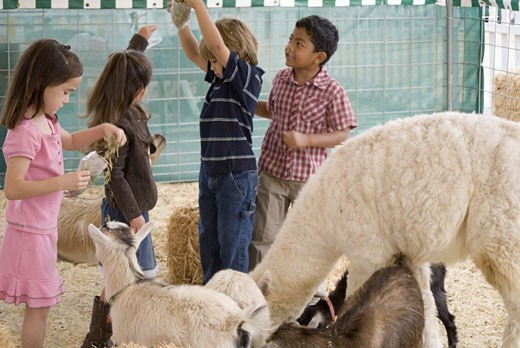 Kids with petting zoo animals : Stock Photo