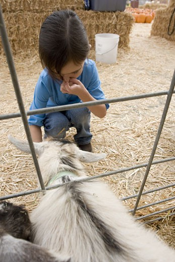 Stock Photo: 1624R-5792 Young girl with petting zoo animal