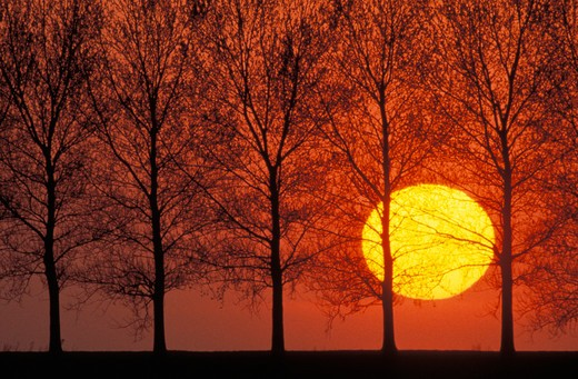 Row of trees and sunset : Stock Photo
