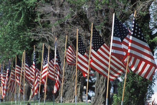 Row of American Flags : Stock Photo