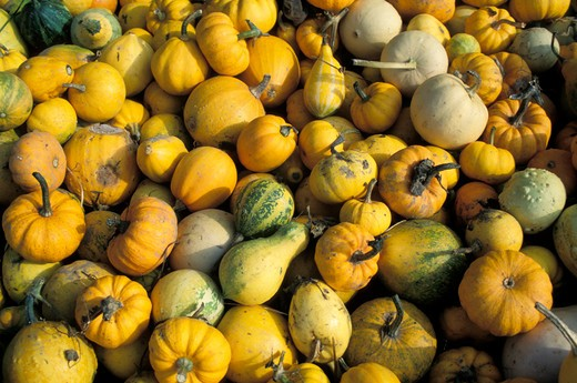 Pile of Squash : Stock Photo