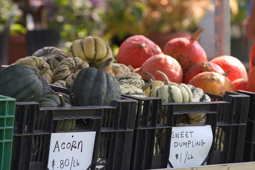 Stock Photo: 1626R-15403 Harvest Vegetables For Sale At The Farmer's Market