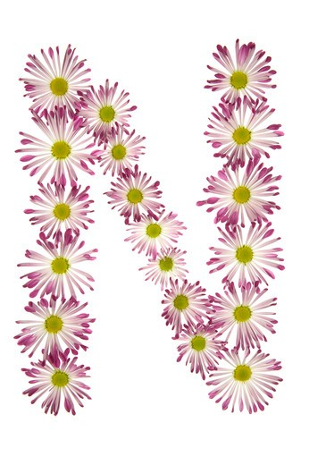 An N Made Of Pink And White Daisies : Stock Photo