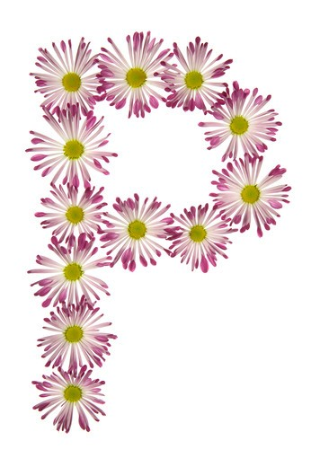 Stock Photo: 1626R-15514 A P Made Of Pink And White Daisies