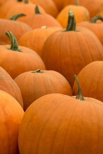Stock Photo: 1626R-15542 Pumpkins
