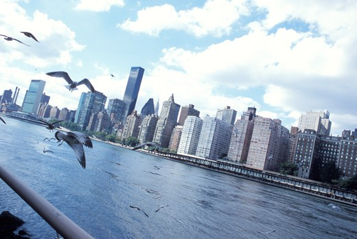 Gulls Flying Over A River In Front Of A Cityscape : Stock Photo