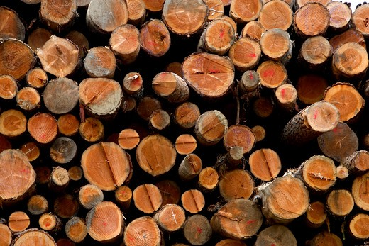 Stock Photo: 1626R-17203 Harvest of Trees