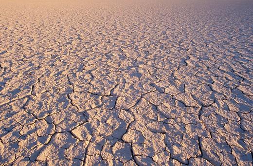 Cracked Earth : Stock Photo