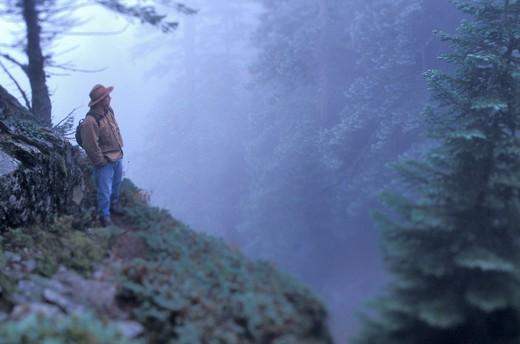 Man Admiring Misty Forest : Stock Photo