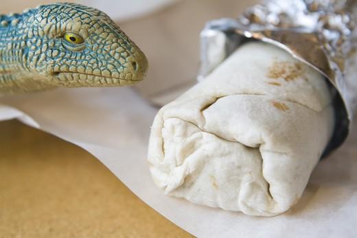 Stock Photo: 1626R-20801 Hungry Like the Lizard